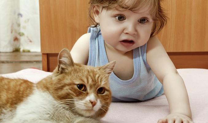 ما هي أضرار تربية القطط في المنزل على الأطفال والبنات؟