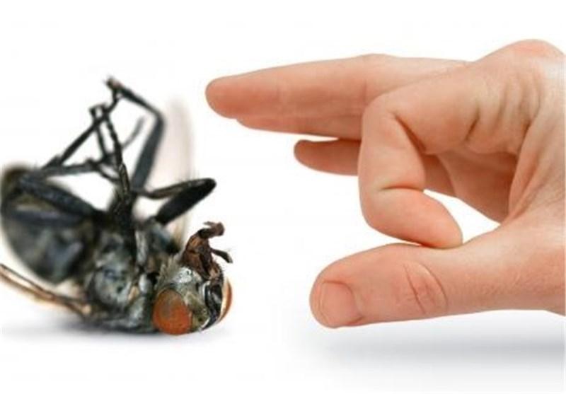 إبعاد الحشرات المزعجة عن منزلك